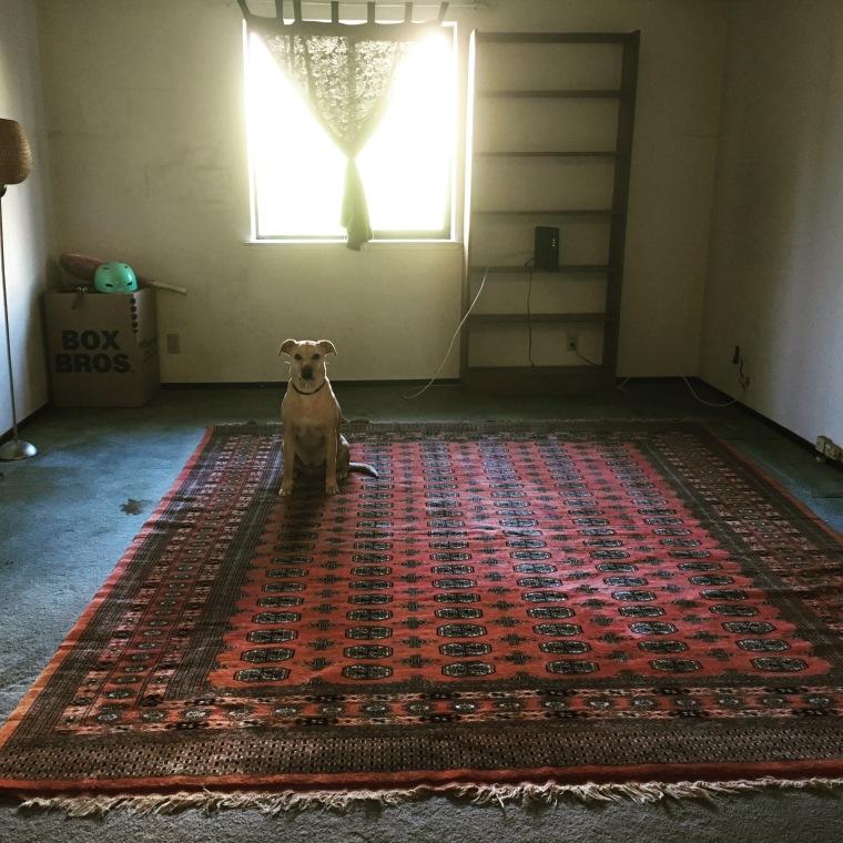 abby and rug