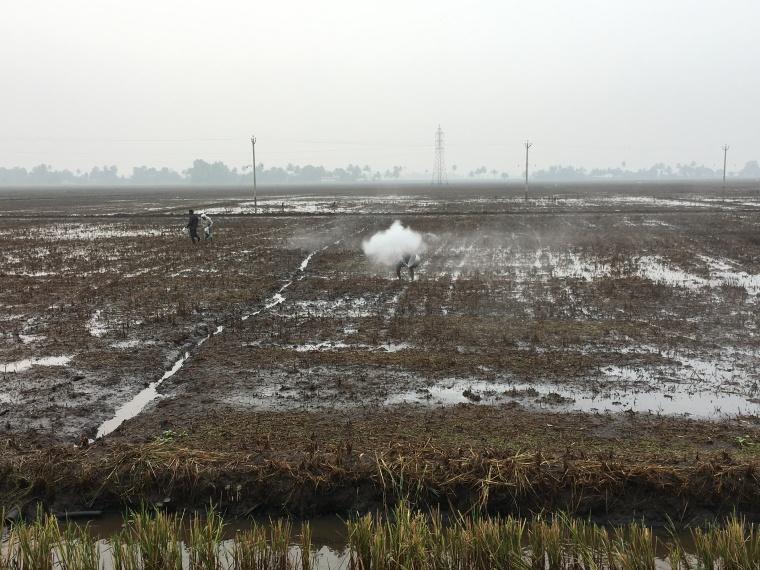 kochi-rice-field